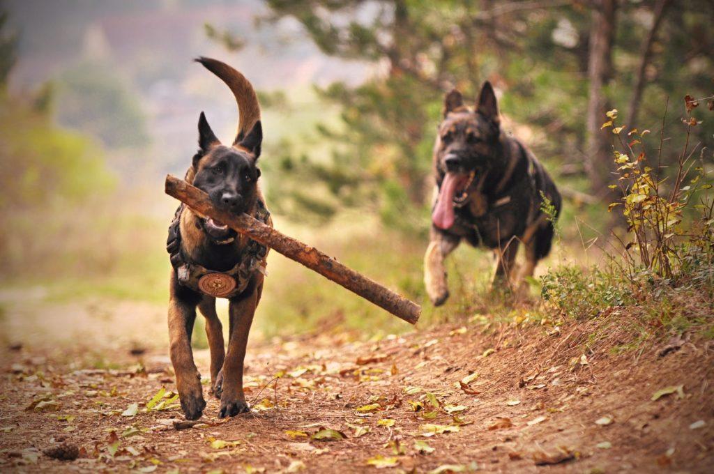 Blog 2 macht en agile hond en stok